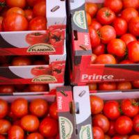 tomaten-gurken-hannover-ilias